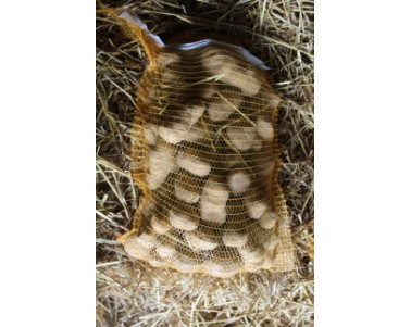 Pomme de terre Bintje - Calibre 45-75