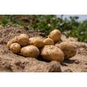 Pomme de terre Charlotte - Colis de 29kg